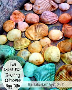 Rainbow Sea Shells with Easter Egg Dye from The Educators' Spin On It