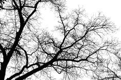 Trinity Tree