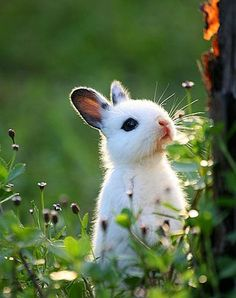 a little white bunny...