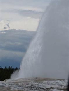 The Old faithful : Yellowstone park. 2014