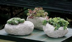 Sweet Volcanic Rock Planters Great for Succulents
