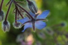 Een bloem heeft ook weleens een vorm van een insect. De vlinder bijvoorbeeld