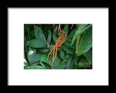 chamaedorea sartorii, orange, flower, bloom, blossom, nature, garden, michiale, schneider, photography