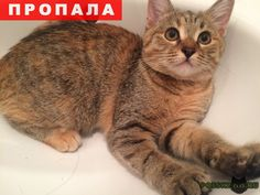 """Пропала кошка г.Рязань http://poiskzoo.ru/board/read28583.html  POISKZOO.RU/28583 Помогите найти кошечку - ей всего .. месяца. Откликается на имя """"лИса"""" Пропала в районе ул. зубковой ..к.. Уже .. недели ищу её по всем дашкам и не хочу терять надежды, что найду ее. Пожалуйста, может кто то видел хотя бы похожую позвоните (напишите) ...  РЕПОСТ! @POISKZOO2 #POISKZOO.RU #Пропала #кошка #Пропала_кошка #ПропалаКошка #Рязань"""