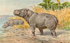 Prehistoric Hippo | Metamynodon possessed a bulbous, hippo-like body and high-set eyes ...