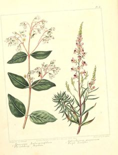 Botanical Artworks