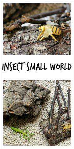 Put together a simple insect small world for kids to play with - using materials you have on-hand. Perfect for a preschool insect theme or just because small world play is amazingly fun for the kids. Bug Activities, Creative Activities For Kids, Halloween Activities For Kids, Spring Activities, Infant Activities, Preschool Themes, Preschool Teachers, Preschool Science, Science Classroom