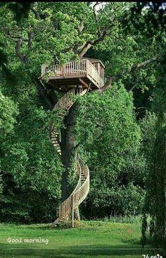 Tallest tree house