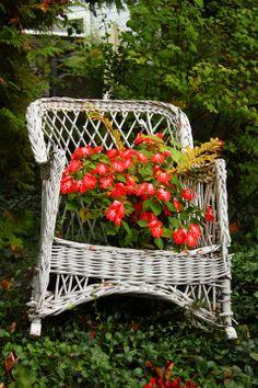 Beautiful chair planter