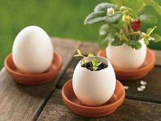 Huevos maceteros