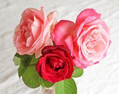 beauté des roses du jardin Roses, Flowers, Plants, Gardens, Pink, Rose, Florals, Planters, Flower