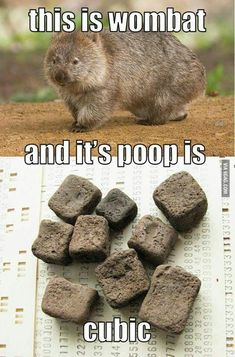 10 Best Funny Animal Photos for Monday #memes