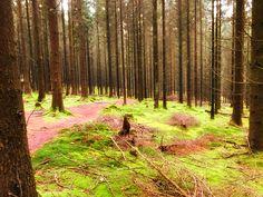 Wanderung: Tafeltour Offizierspfad Imsbach | Saarland