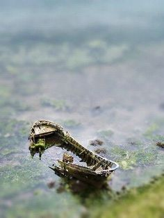 Awesome Tilt Shift Photography||| Its crazy because of how cartoonish this effect is.