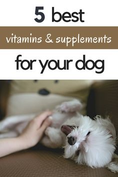 5 Best Vitamins and Supplements for your Dog | What are the best vitamins and supplements to give your dog? Click through to find out!