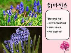 봄 활동자료 봄에 피는 꽃 PPT : 네이버 블로그 Herbs, Flowers, Blog, Korea, Herb, Blogging, Royal Icing Flowers, Flower, Korean