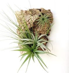 Vertical Garden Air Plants on Sustainable Virgin by Plantzilla, $46.00