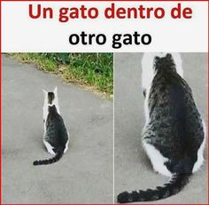 Funny Animal Jokes, Funny Animal Pictures, Cute Funny Animals, Animal Memes, Funny Images, Funny Cats, Cats Humor, Funny Spanish Memes, Crazy Funny Memes