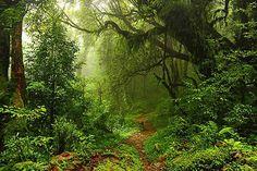 papier peint trompe l'oeil Forêt Tropicale - Izoa