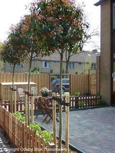 Bomen voor de kleine tuin