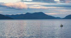 killer whale horizon - Google Search