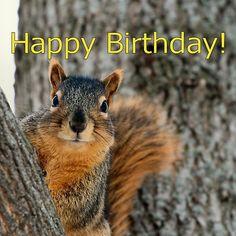 Happy Birthday Squirrel Wishes Silly Birthday Wishes, Happy Birthday Squirrel, Happy Birthday Art, Happy Birthday Wallpaper, Happy Birthday Images, Happy Birthday Greetings, Birthday Pictures, Squirrel Memes, Ninja Squirrel