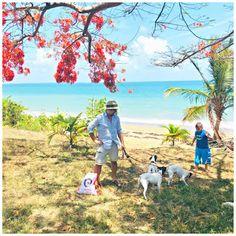 porto rico Ayurveda, Formation Yoga, Coaching, Le Pilates, Porto Rico, Suspension Training, Photos Originales, Aerial Yoga, Yoga Teacher Training