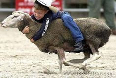 little cowgirl riding sheep | Funny Photos | rodeo | sheep-riding