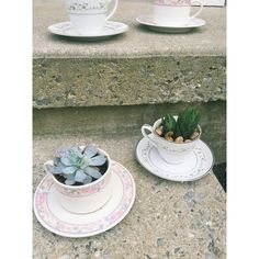 NEW tea cup succulents!! So cute I want to keep them 🌿 #teacup #succulents #upcycle #garden #thrift #vintage #terrariums
