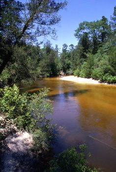Scenic view of the Blackwater River - Okaloosa County, Florida