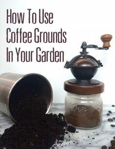 Don't toss out your used coffee grounds! Using them in the garden helps you boost soil fertility, deter slugs and grow the garden of your dreams.