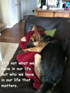 German Shepherd Dogs Australia https://www.facebook.com/German.Shepherd.Dogs.Australia