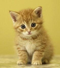 Photo extraite de Découvrez des bébés chats tous plus mignons les uns que les autres (6 photos)