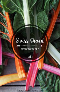 Swiss Chard - Seed to Table Guide