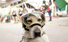 Frida, la perra rescatista héroe del terremoto en México