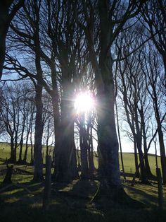 Winter sun through trees.