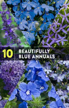 Blue flowering plants always seem to be in high demand. It is natural for things that are in short supply to be highly valued, and that is certainly true of blue flowers. This article will give you ten beautiful ideas for blue flowering annual plants. Flowering Shade Plants, Blue Plants, Shade Perennials, Hydrangea Wallpaper, Blue Flower Wallpaper, Container Flowers, Container Plants, Container Gardening, Colorful Flowers