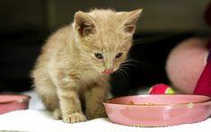 ▷ ¿Pueden los gatos comer pan y queso? 【2018】 Fauna, Orange Cats, Animals, Happy, Being Healthy, Tasty, Animales, Animaux, Ser Feliz