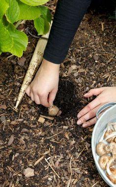 Gartenpflege Im Gemieteten Garten | Hats, Garten And Oder Hinweise Krokus Pflanzen Rasen Blumentopf