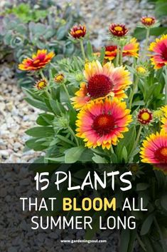 You have a wide selection of summer bloomers to choose from. Gardening 15 Plants That Bloom All Summer Long Garden Yard Ideas, Diy Garden, Summer Garden, Dream Garden, Lawn And Garden, Garden Projects, Full Sun Garden, Summer Plants, Garden Trellis