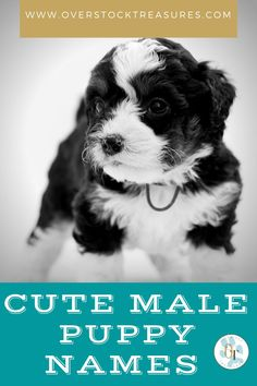Hello pet lovers, dog lovers Are you a new pet owner? Did you just get a cute puppy or cute dog? Congrats! I created a list of unique dog names male list. You are welcome to have my wonderful list of dog names boy unique list. This list is also for dog male names for puppies. They are super cute puppy names male. I love these male dog names / dog boy unique list.#puppy #puppynames #names #dognames #dog #doglove Cute Male Dog Names, Unique Cat Names, Cute Puppy Names, Super Cute Puppies, Cute Dogs, Pet Loss Grief, Famous Dogs, Dog List, Cat Memorial
