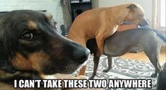 Funny Animal Pictures Of The Day – 38 Pics