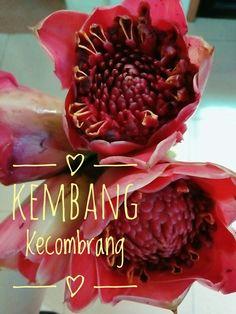 Kecombrang flowers for sambal matah...