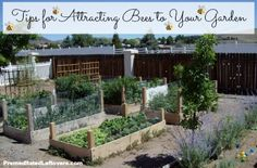 How to attract bees to your garden | tips from PremeditatedLeftovers.com