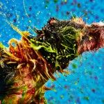 Shelter Dogs Paint Masterpieces With Just A Colorful Shake Of Their Fur
