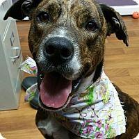 Adopt A Pet :: Bianca - Lisbon, OH