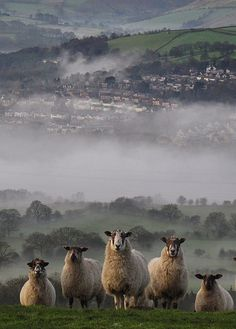 Peak District & Derbyshire, England. Photo: Helena Jones (2012)