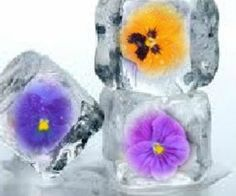 Springtime flowers make the prettiest ice cubes!  -- How To Make Floral Ice Cubes From Edible Flowers