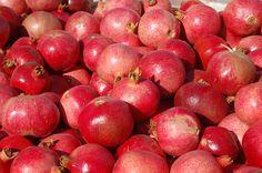 California Pomegranates. Farm. Farmer