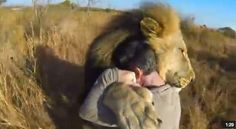 So amazing! Start Your Day with a Lion Hug!